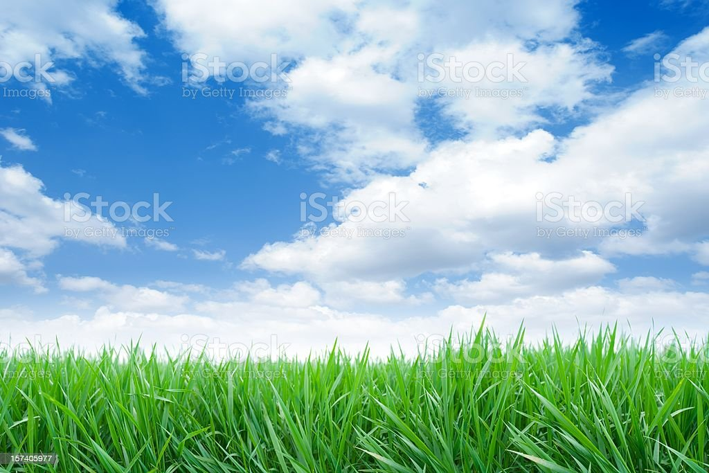 Long green grass field with a cloudy blue sky royalty-free stock photo