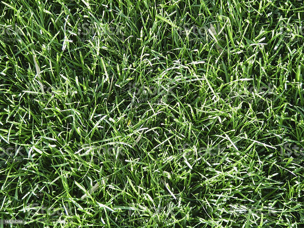 Long green lawn royalty-free stock photo