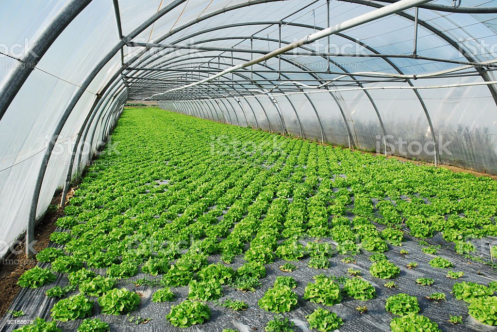 Long greenhouse showing greenery on the ground growing royalty-free stock photo