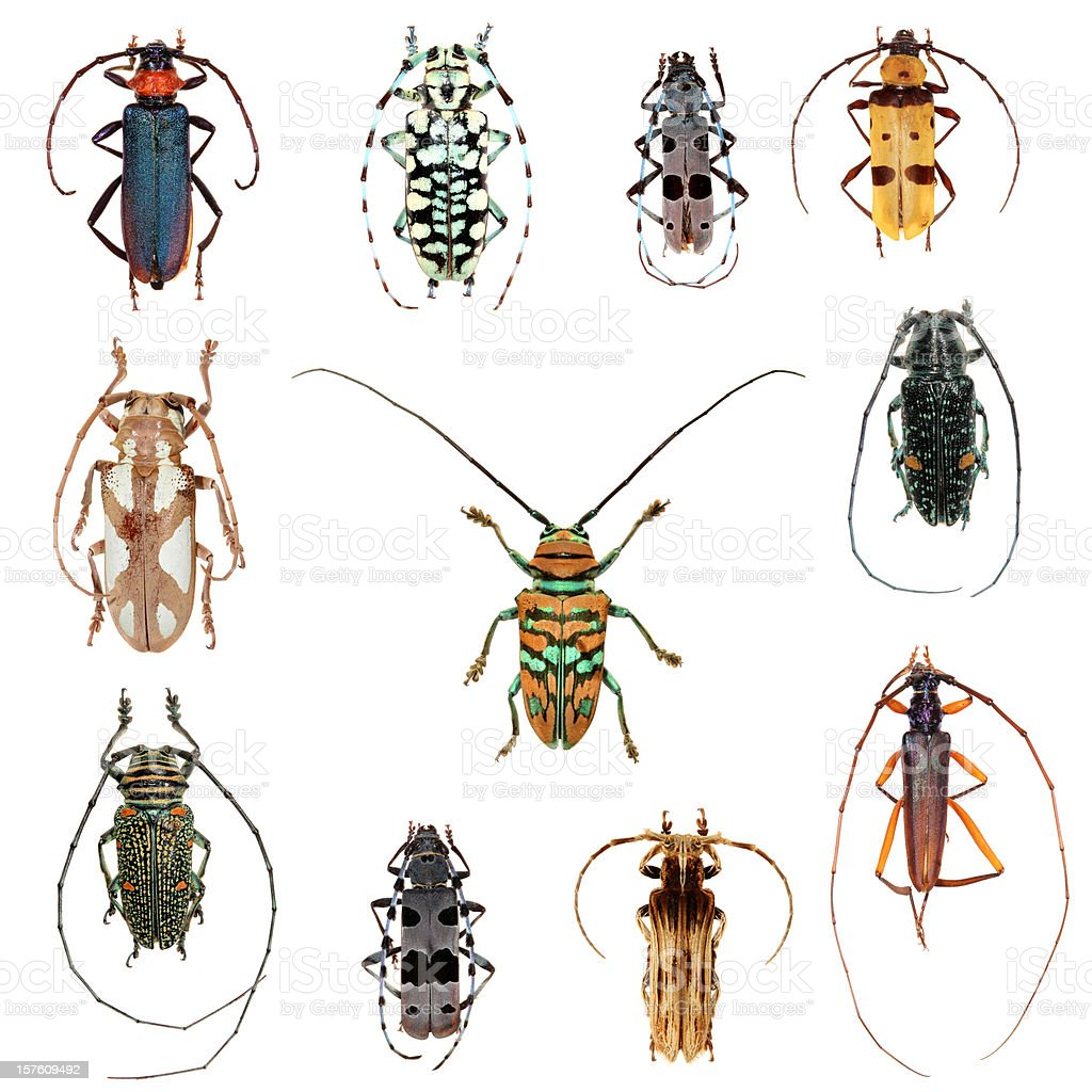 Long horned beetles collection XXXL stock photo