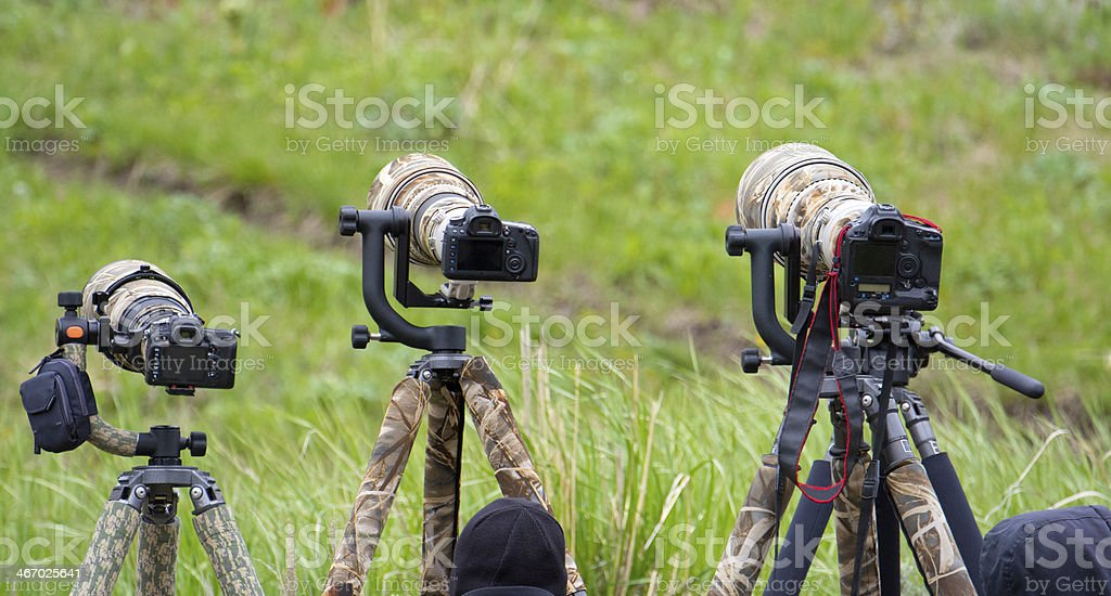 Long Lenses on DSLR, Wildlife Photographers royalty-free stock photo