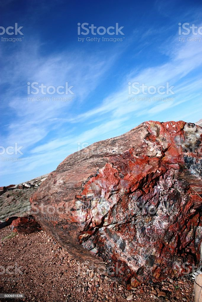 Long Logs in Petrified Forest National Park in Arizona, USA stock photo