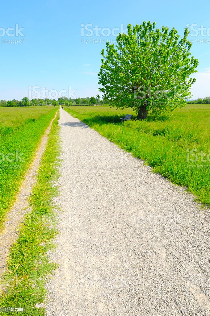 Long Path Ahead royalty-free stock photo