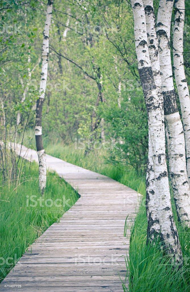 long path stock photo