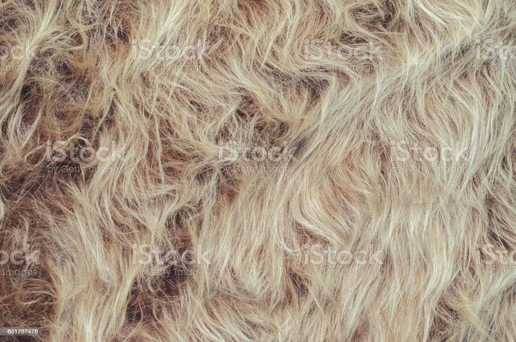 Long pile fur background stock photo