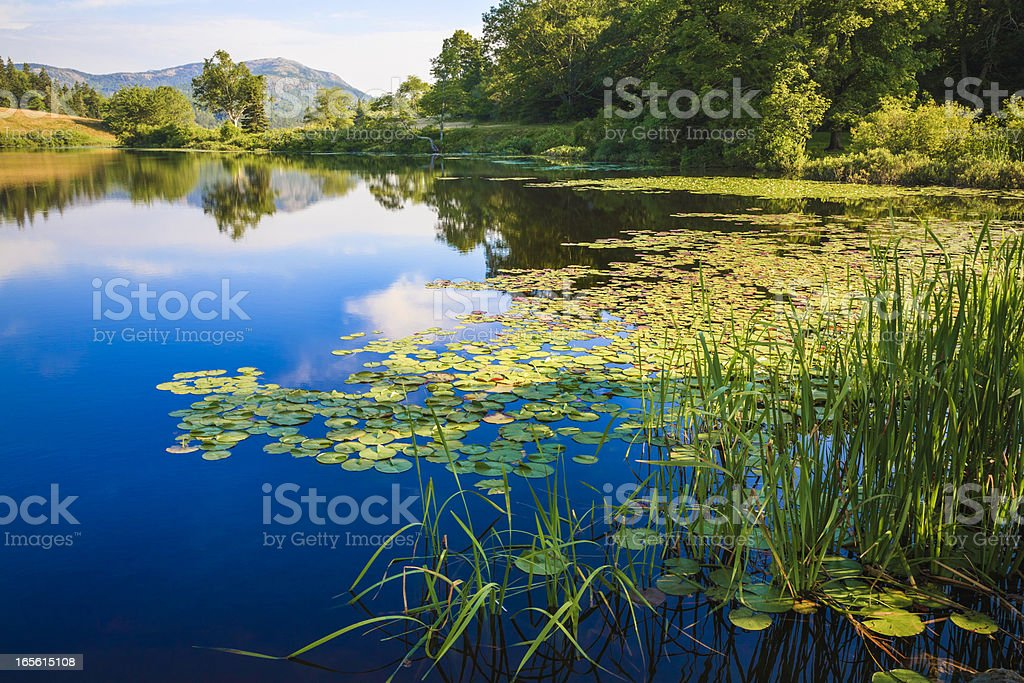 Long Pond, Maine, deep blue water lake, lily pads, grasses stock photo