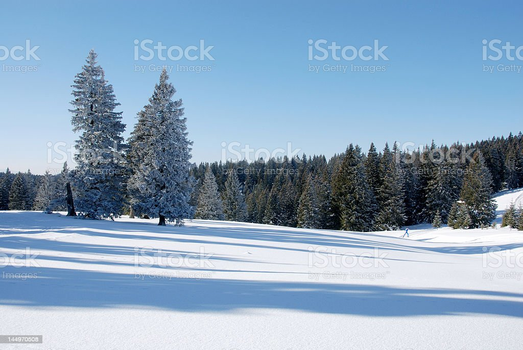 Long shadows on the snow royalty-free stock photo