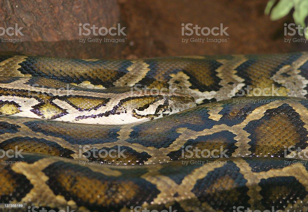 Long snake royalty-free stock photo
