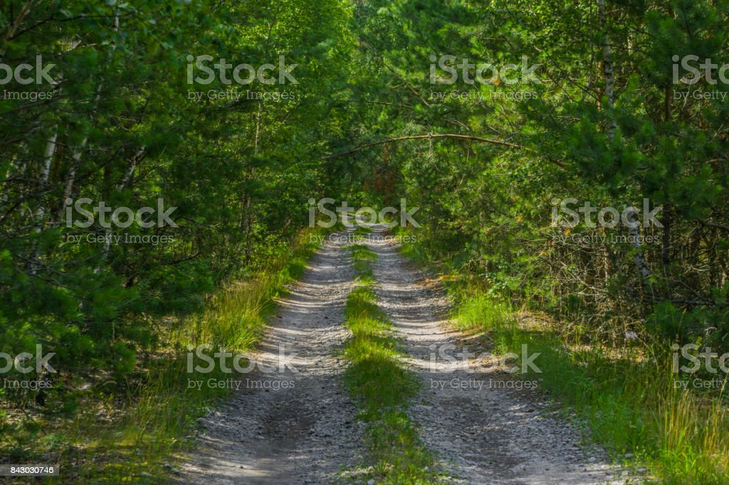 long straight road through the forest stock photo