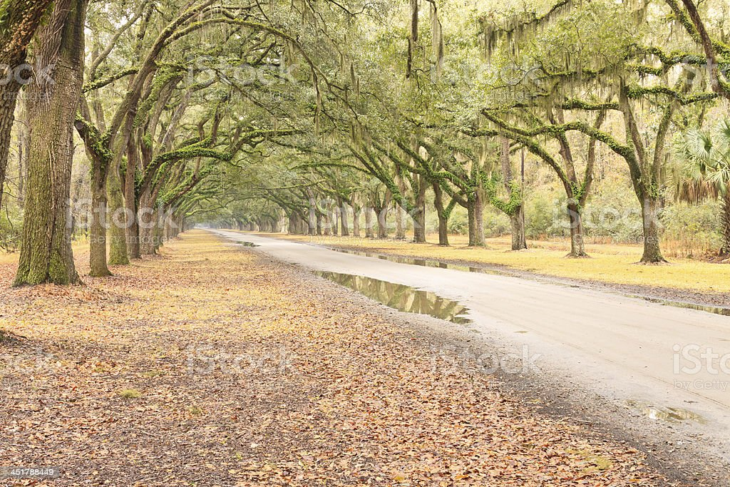 Long Tree Lined Country Road stock photo