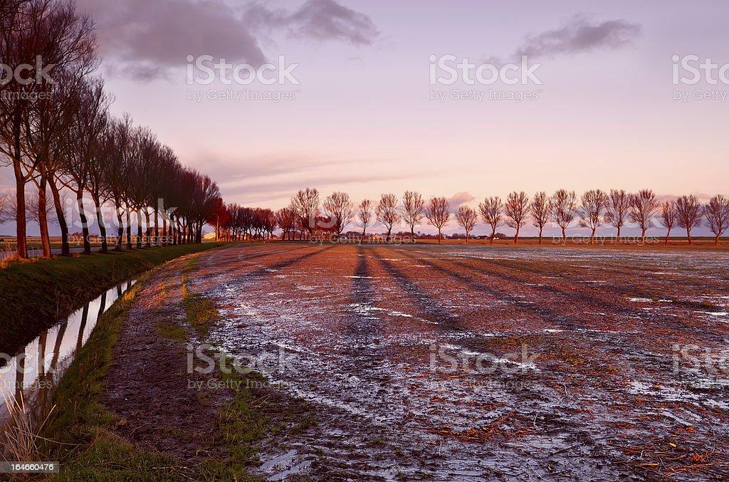 long tree shadows at sunrise royalty-free stock photo