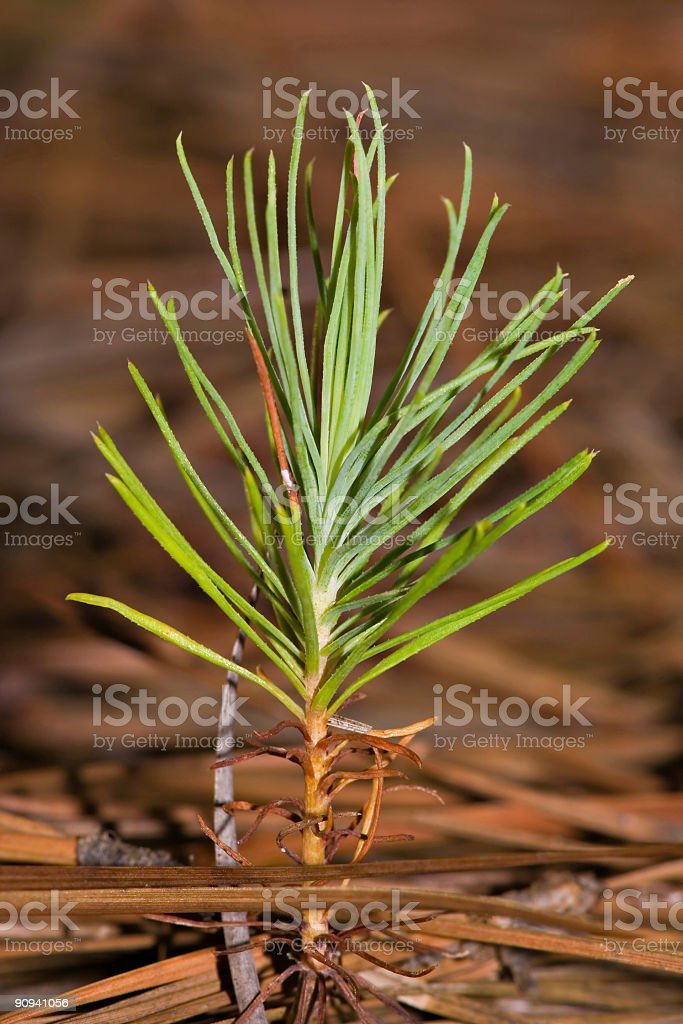 Long way to grow. royalty-free stock photo