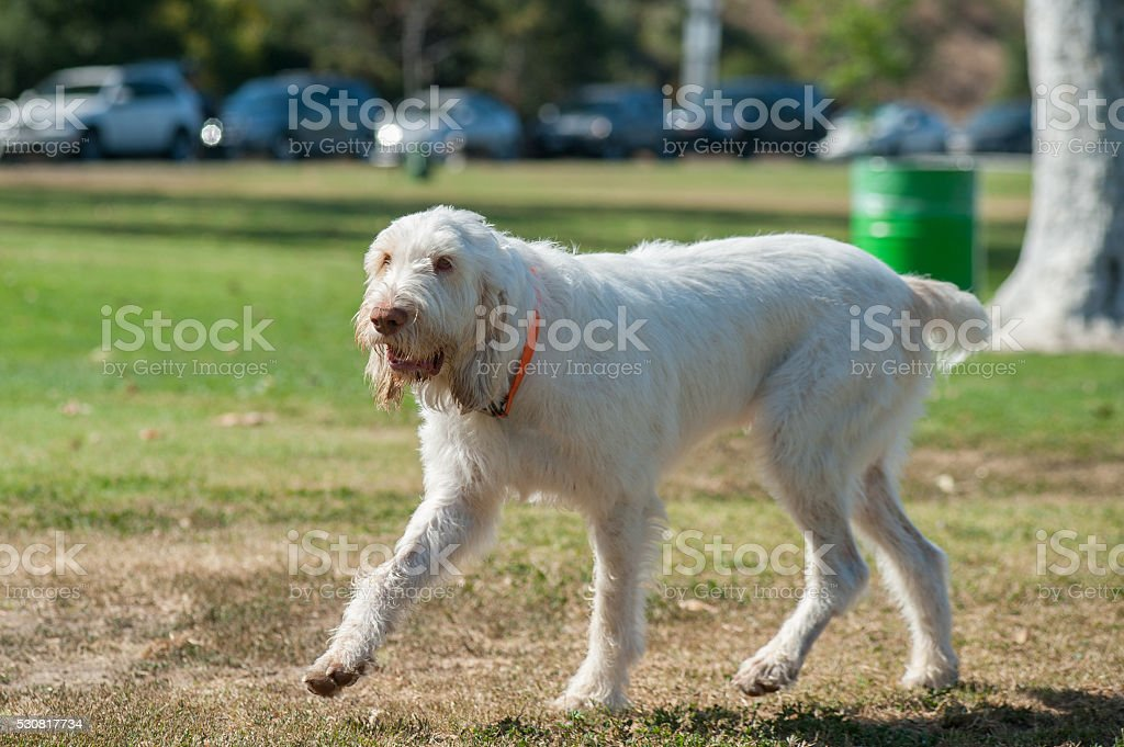 Long white hair gets dirty at the park stock photo