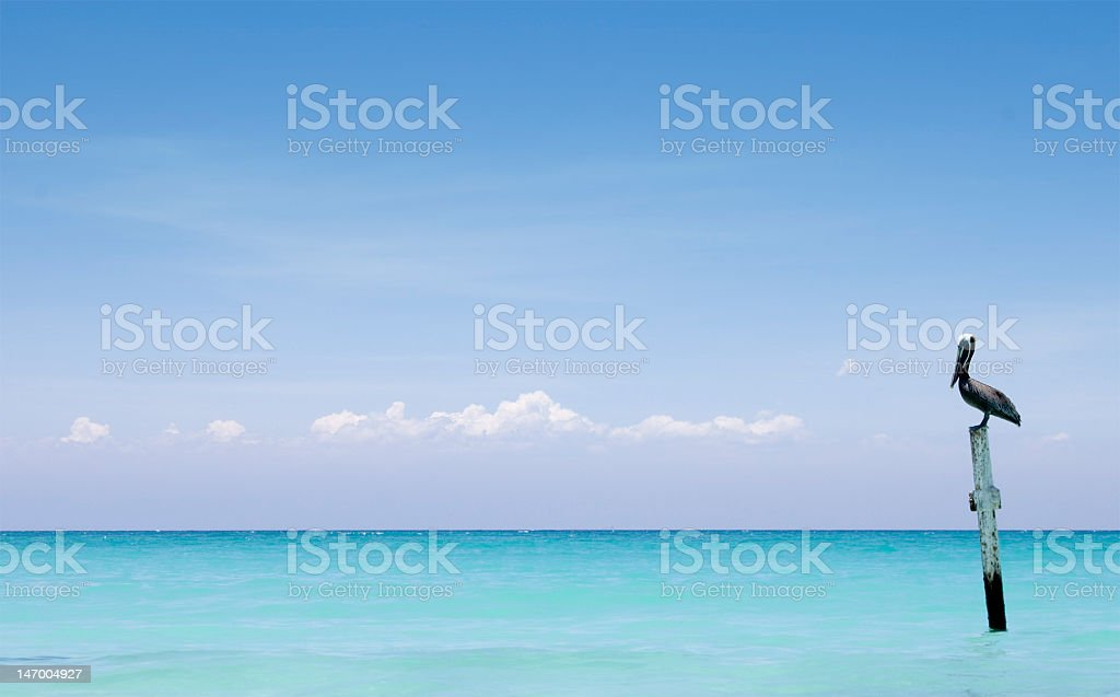 Long-beaked bird sitting on a wooden post in the water stock photo
