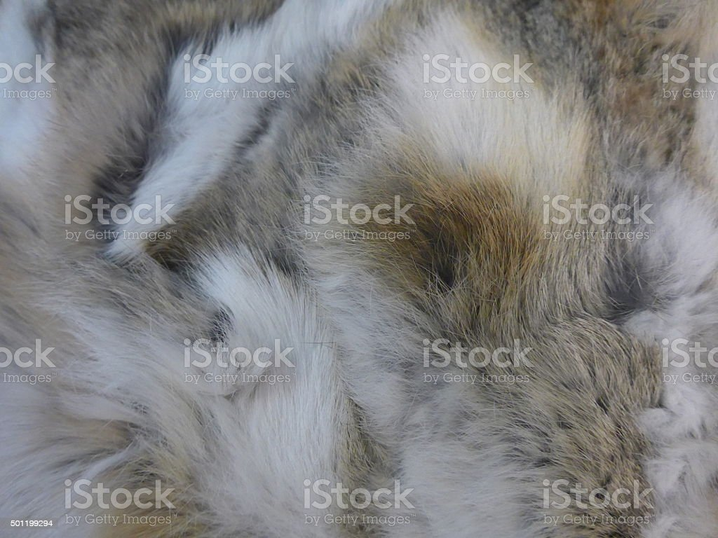 Long-haired, cuddly and fluffy fur stock photo