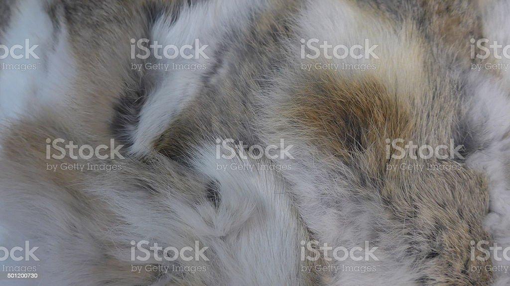 De pelo largo, adorables y suave piel foto de stock libre de derechos
