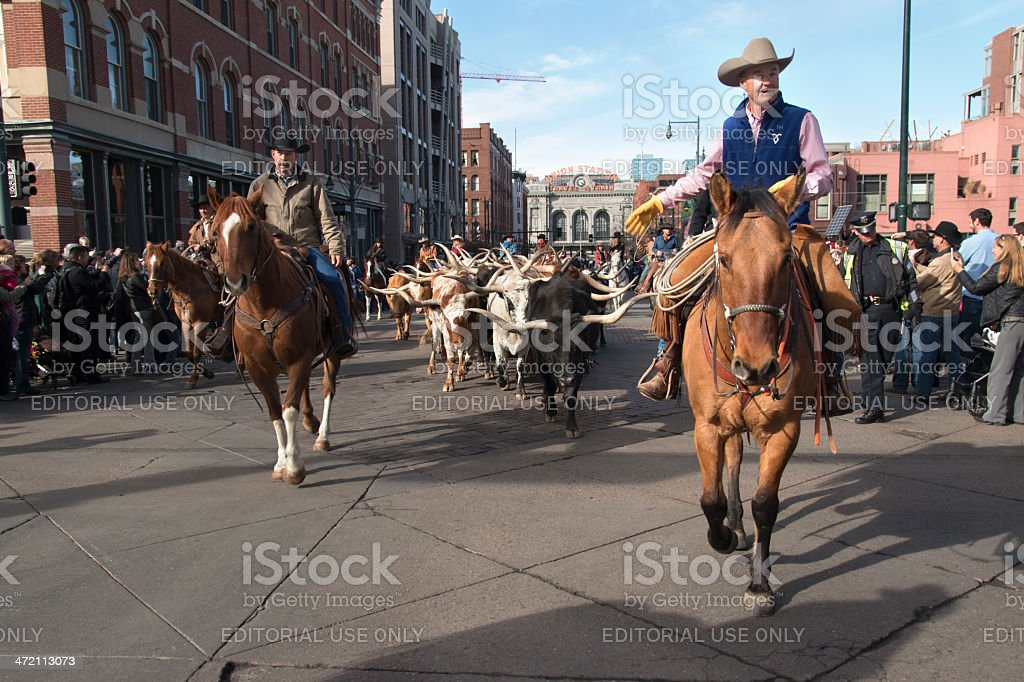 Longhorn cattle in downtown Denver Colorado stock photo