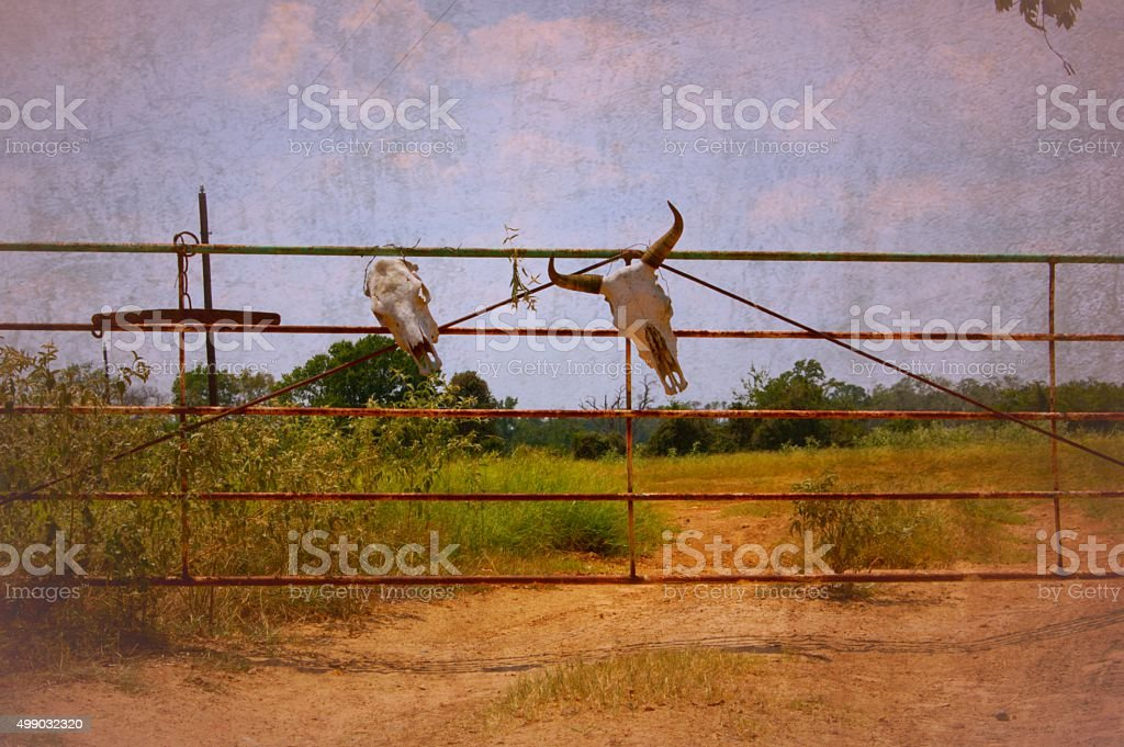 Longhorn Cow Skulls Tied to Gate with Vintage Photo Effect stock photo