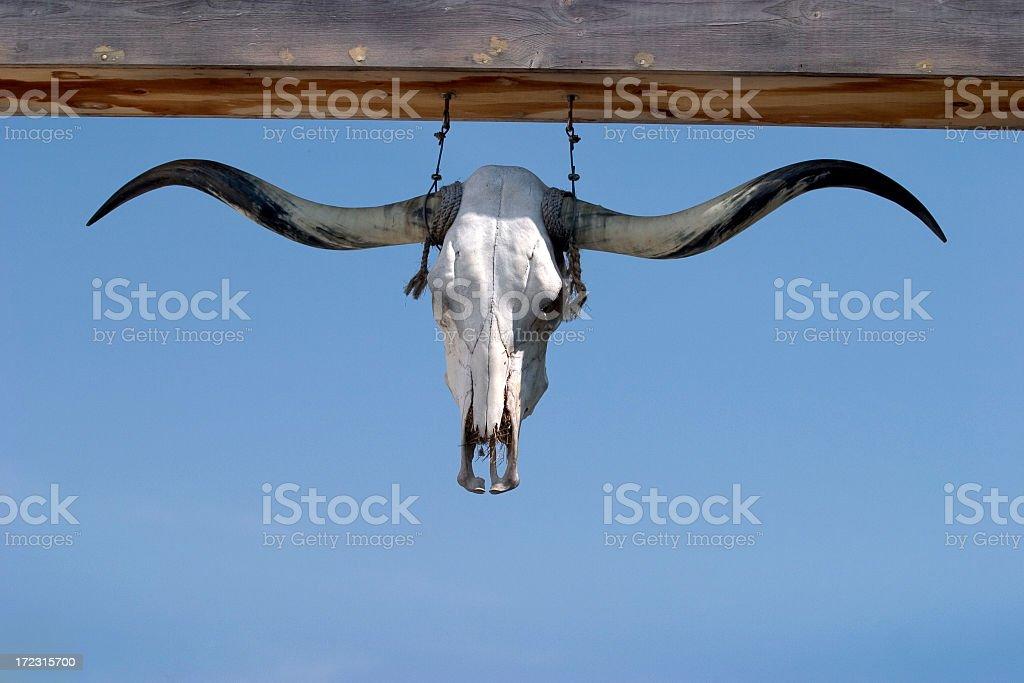 Longhorn Skull stock photo