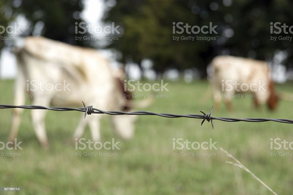 longhorns and barbed wire royalty-free stock photo