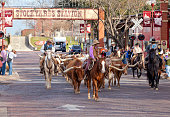 Longhorns cattle drive at the Fort Worth Stockyards.