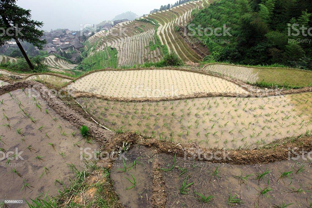 Longji rice terraces, Guangxi province, China stock photo