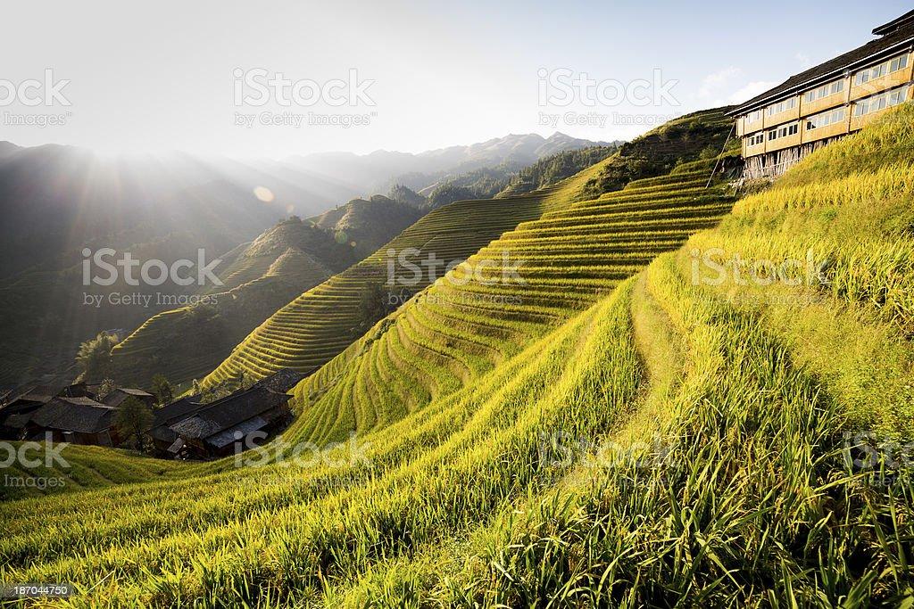 Longji Terraced Fields stock photo