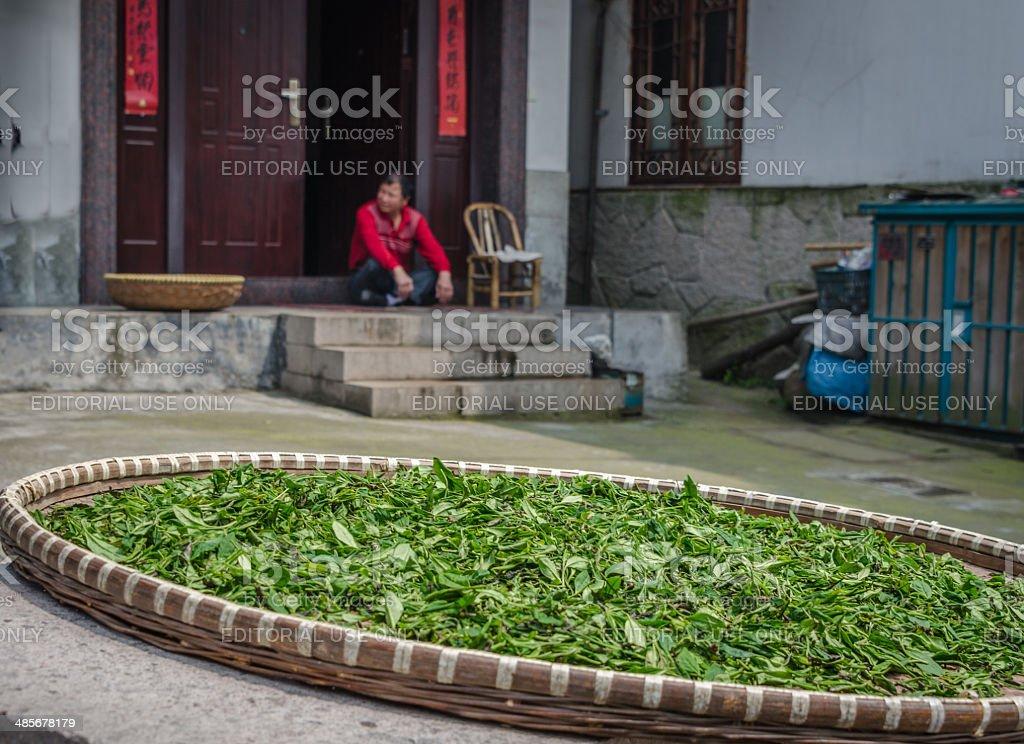 Longjing tea stock photo