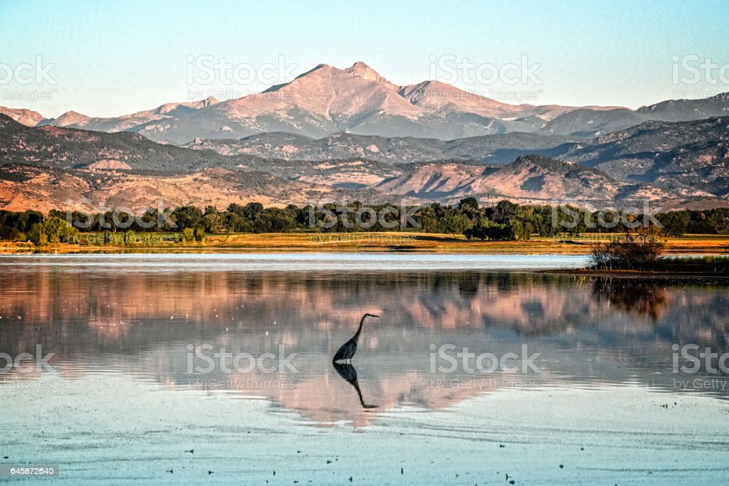 Longs peak and a Blue Heron stock photo