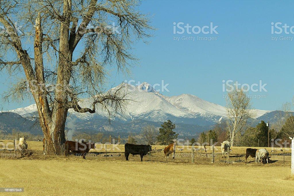 Longs peak From Hygiene Colorado stock photo