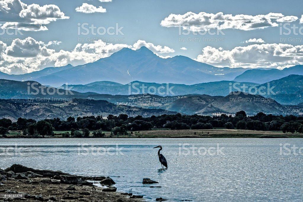 Longs Peak Mountain and Blue Heron in Colorado stock photo