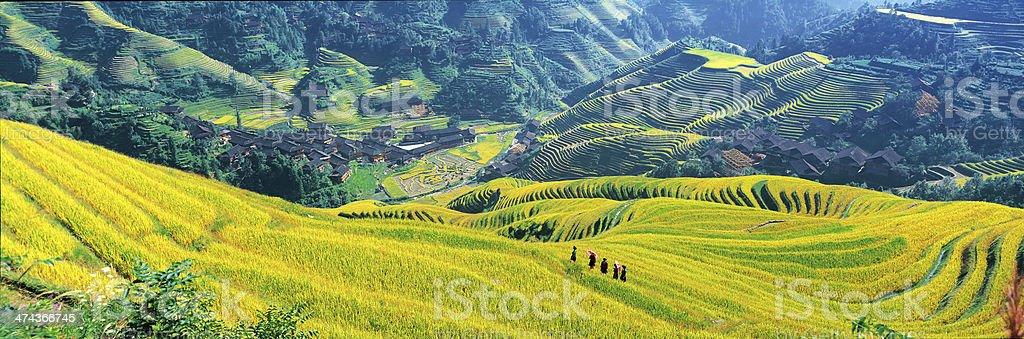 Longsheng rice terraces stock photo