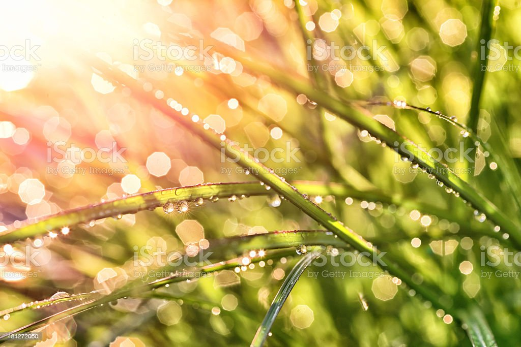 looging through wet reed directly into the sun stock photo