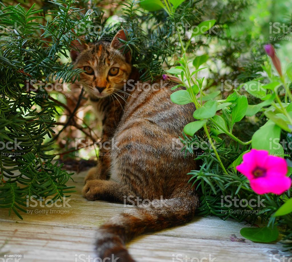 look at me adorable kitten stock photo