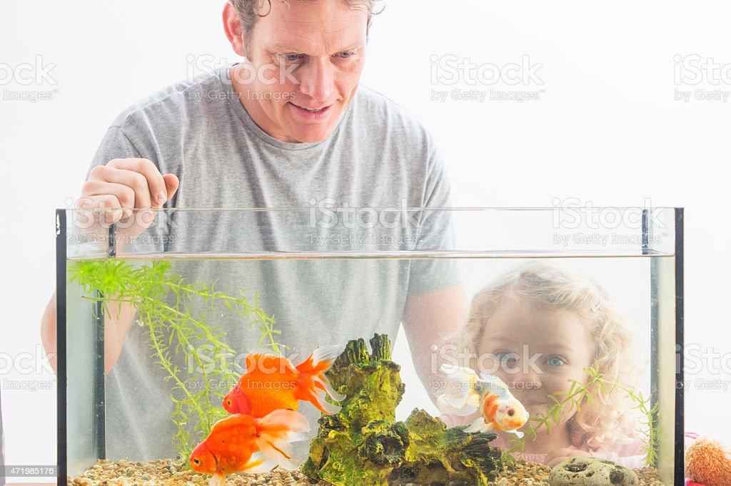 Look at My Pet Goldfish! stock photo