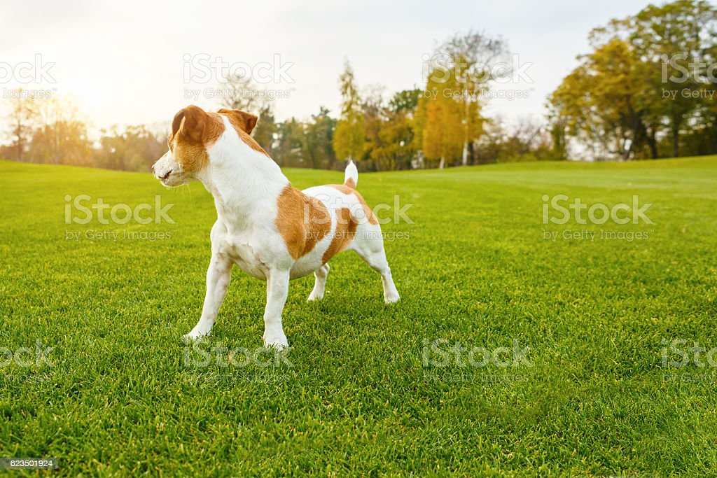 look back pet stock photo