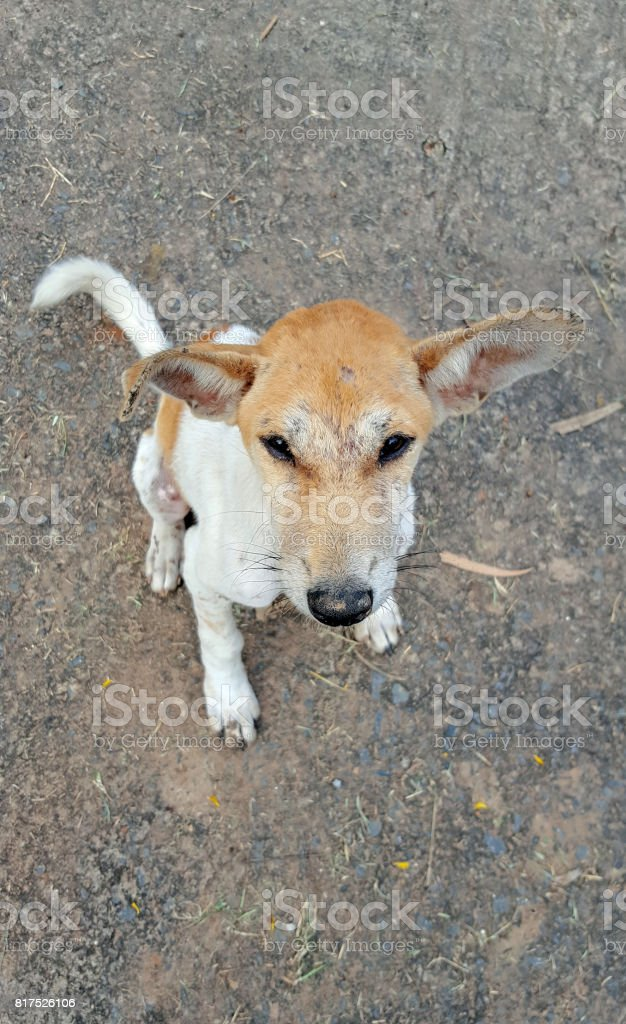 look down face of street dog stock photo