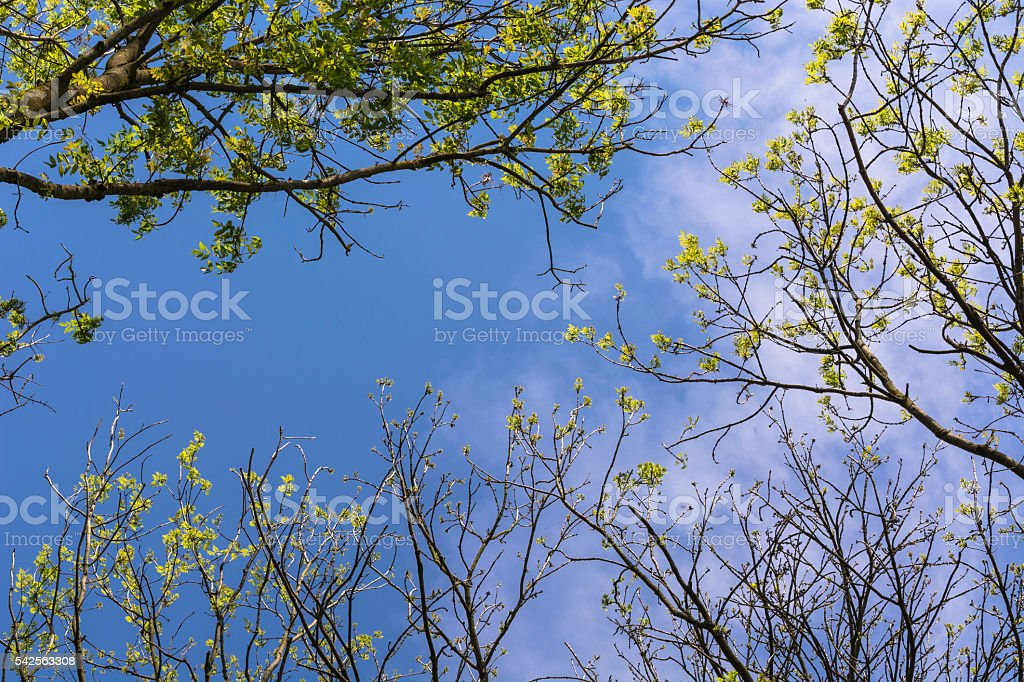 Look in the blue sky stock photo