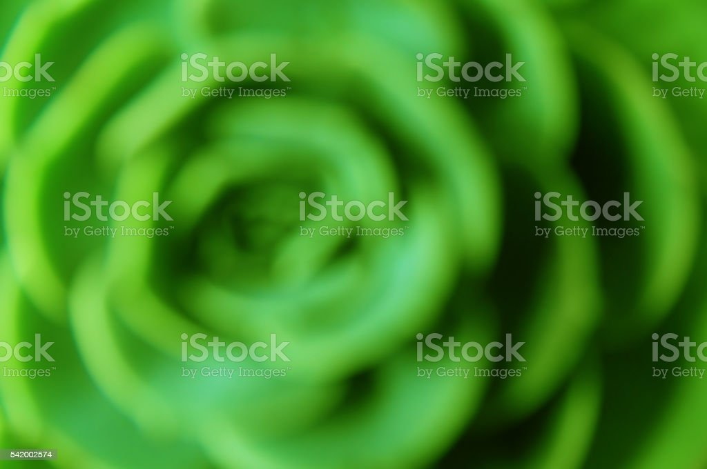 Look like a rose stock photo