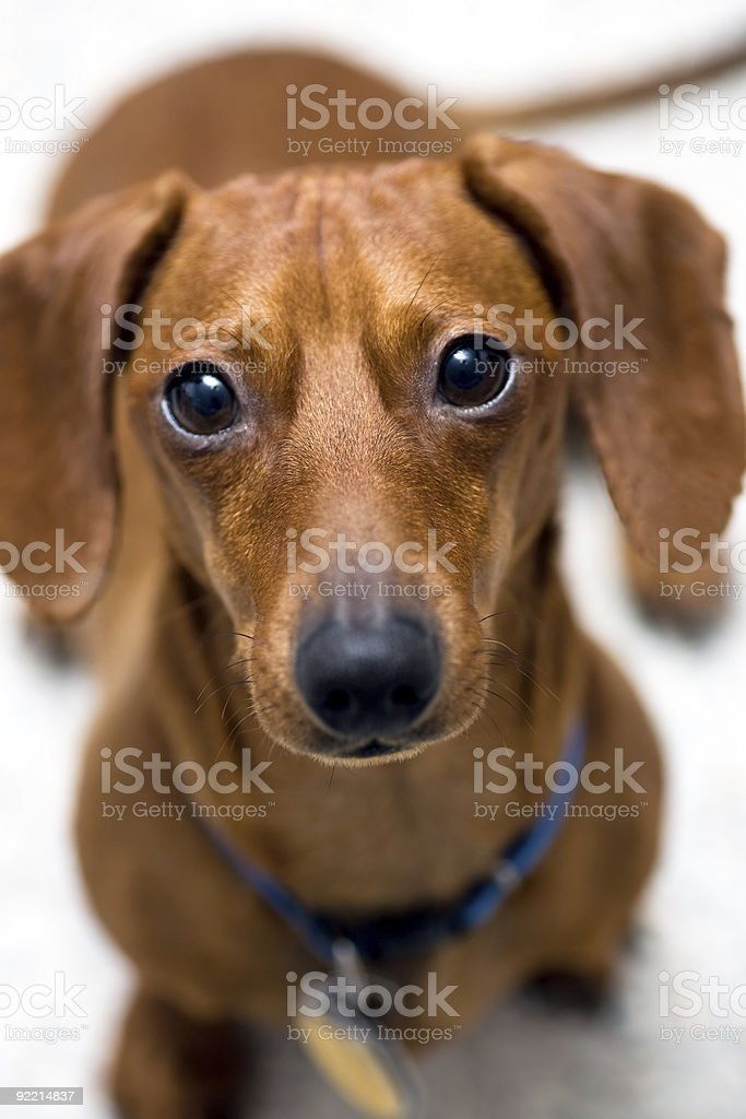 Look of worry royalty-free stock photo