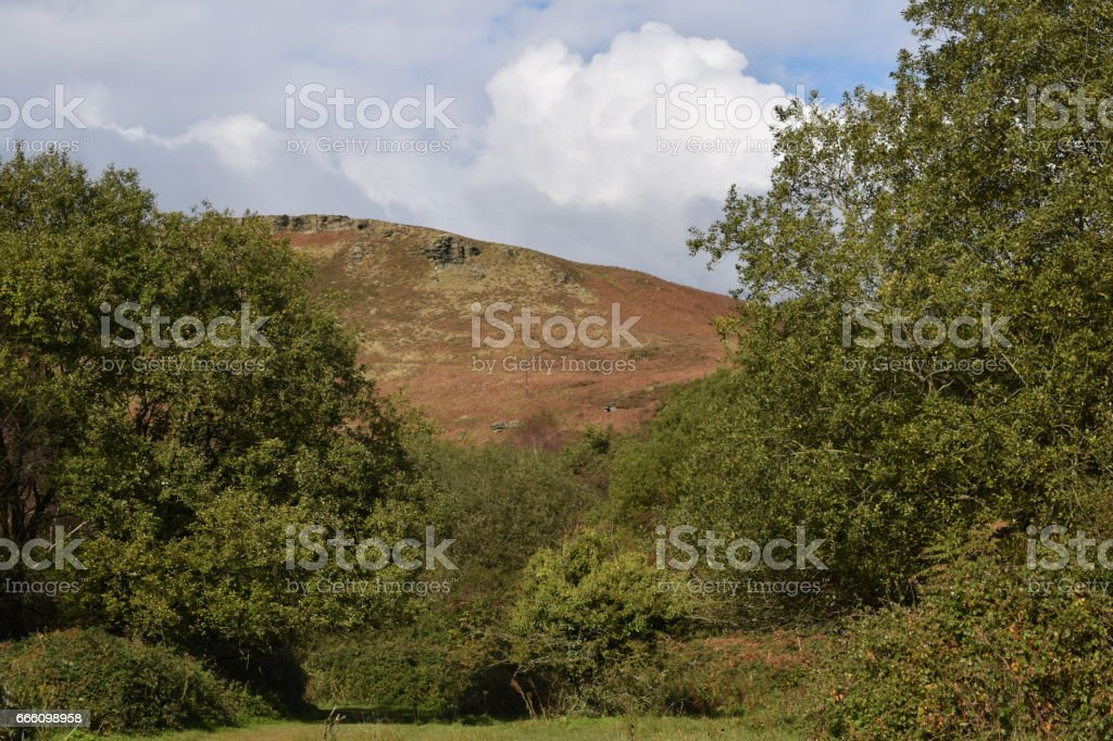 Look through the trees. stock photo