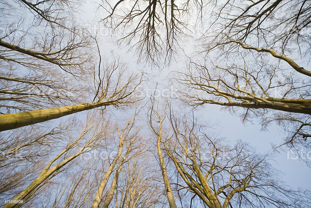 Look to the sky royalty-free stock photo