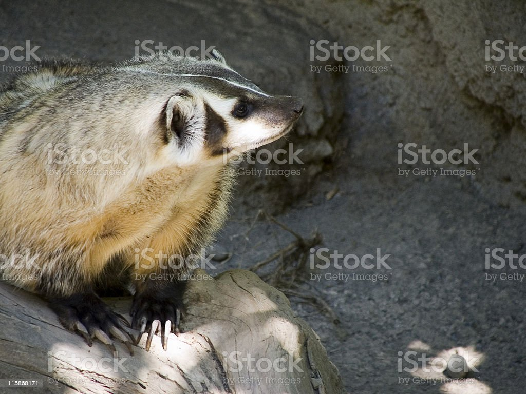 Lookin' Out royalty-free stock photo