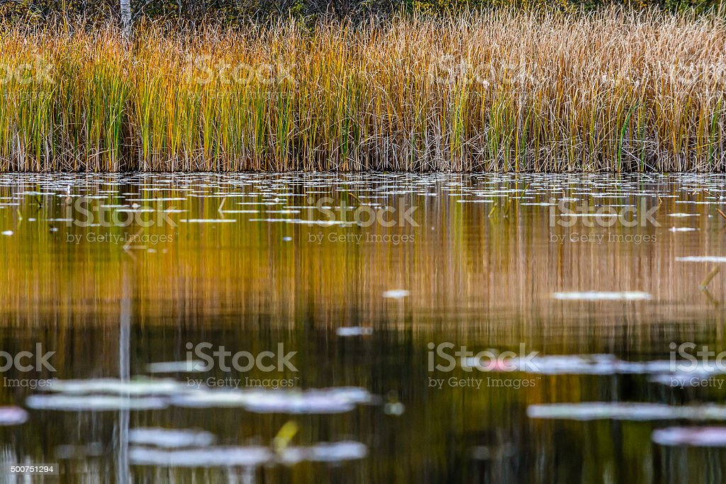 Looking across a pond stock photo