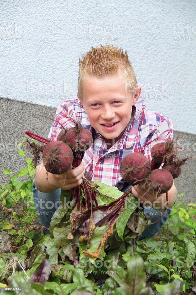 looking at beetroot stock photo