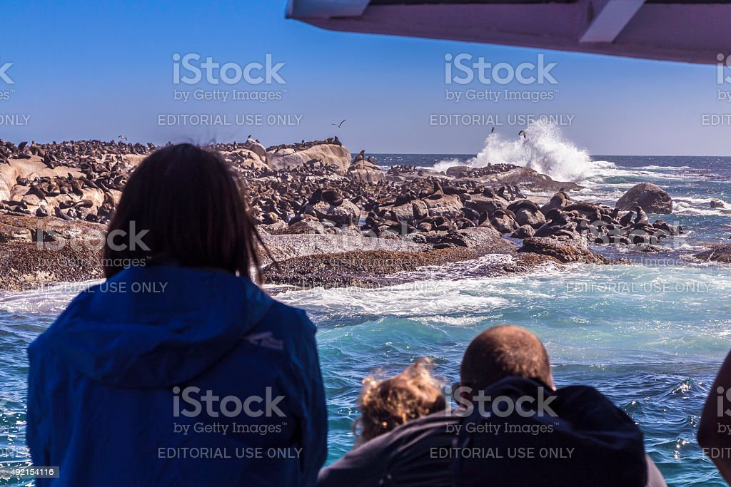 Looking at Seals on Duiker island from the boat stock photo