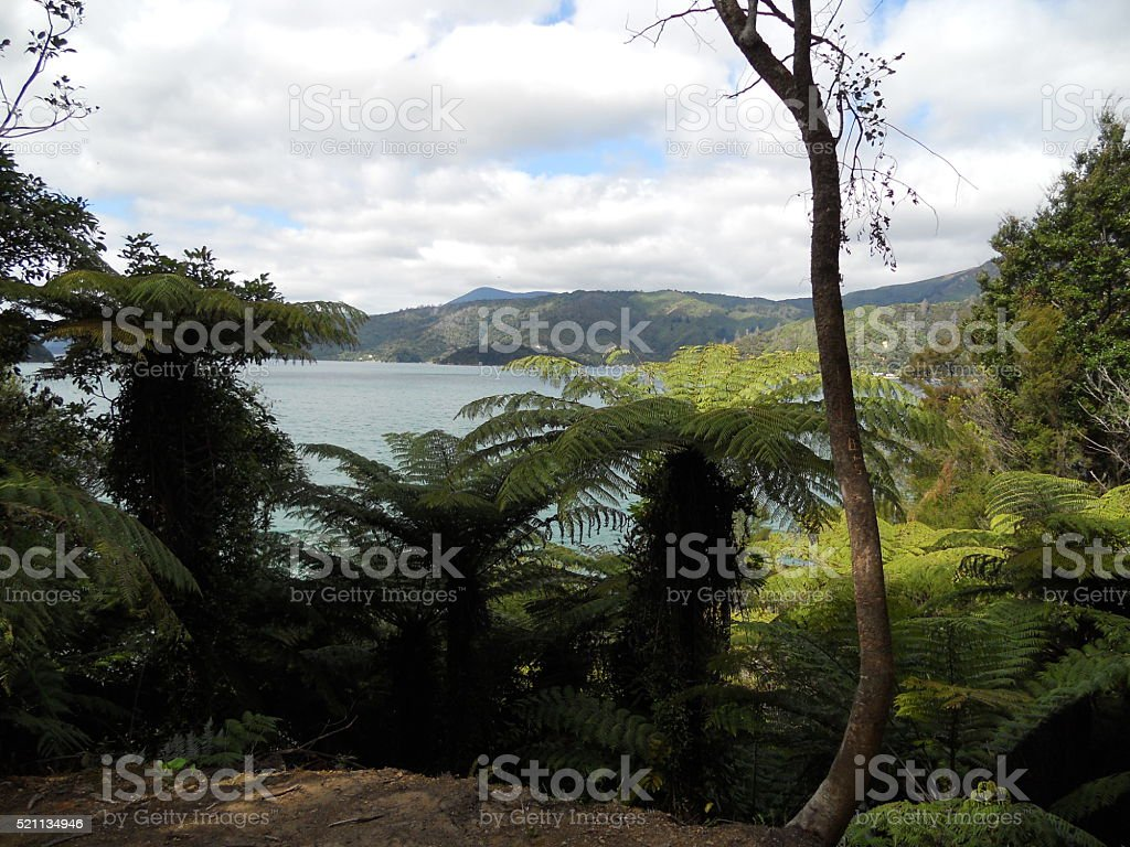 Looking at water through trees stock photo