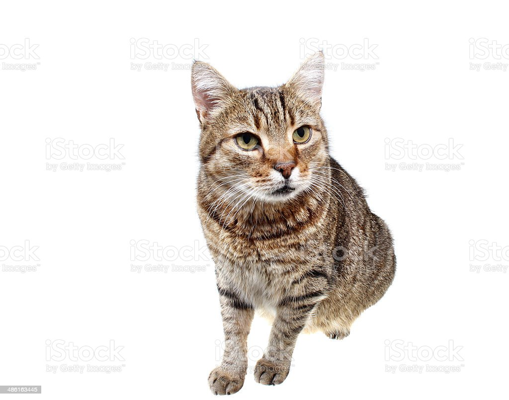 Looking cat royalty-free stock photo