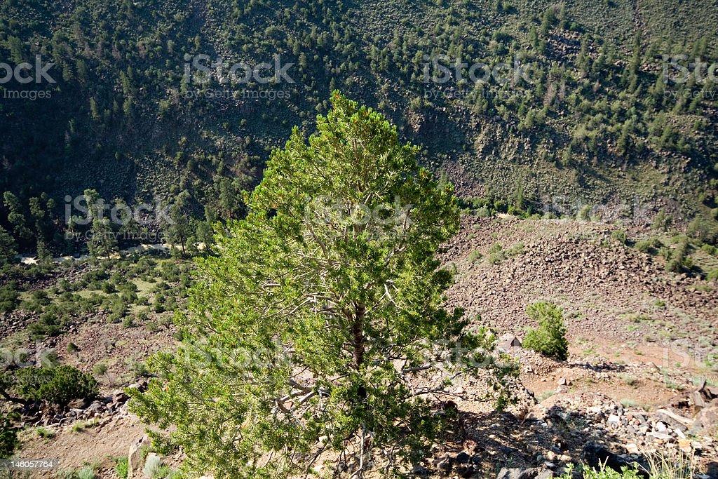 Looking Down Into Rio Grande River Gorge New Mexico, USA stock photo