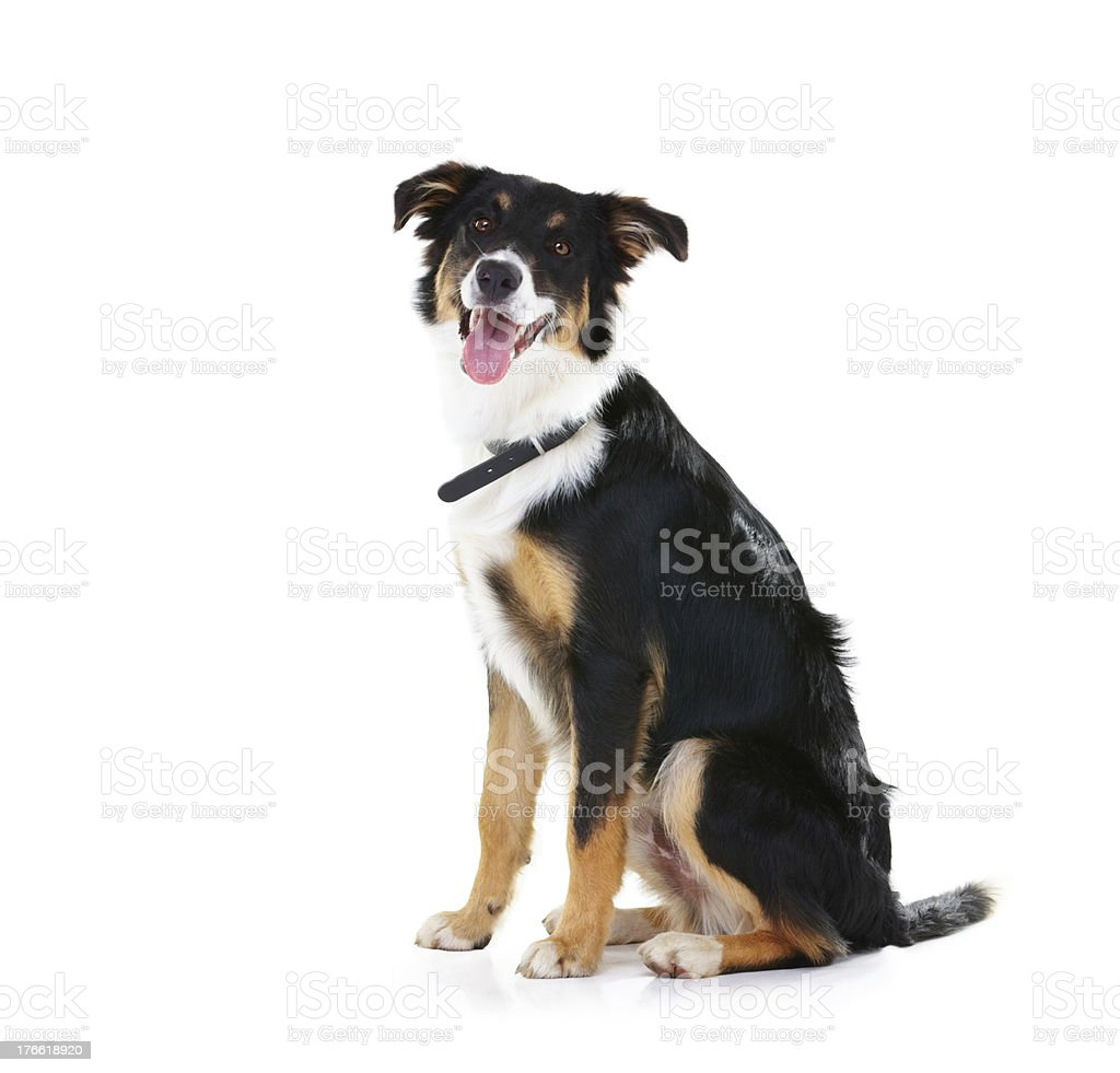 Looking for a loyal friend? royalty-free stock photo